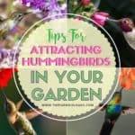 Tips For Attracting Hummingbirds In Your Garden