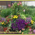 19 Gardening Tips & Ideas