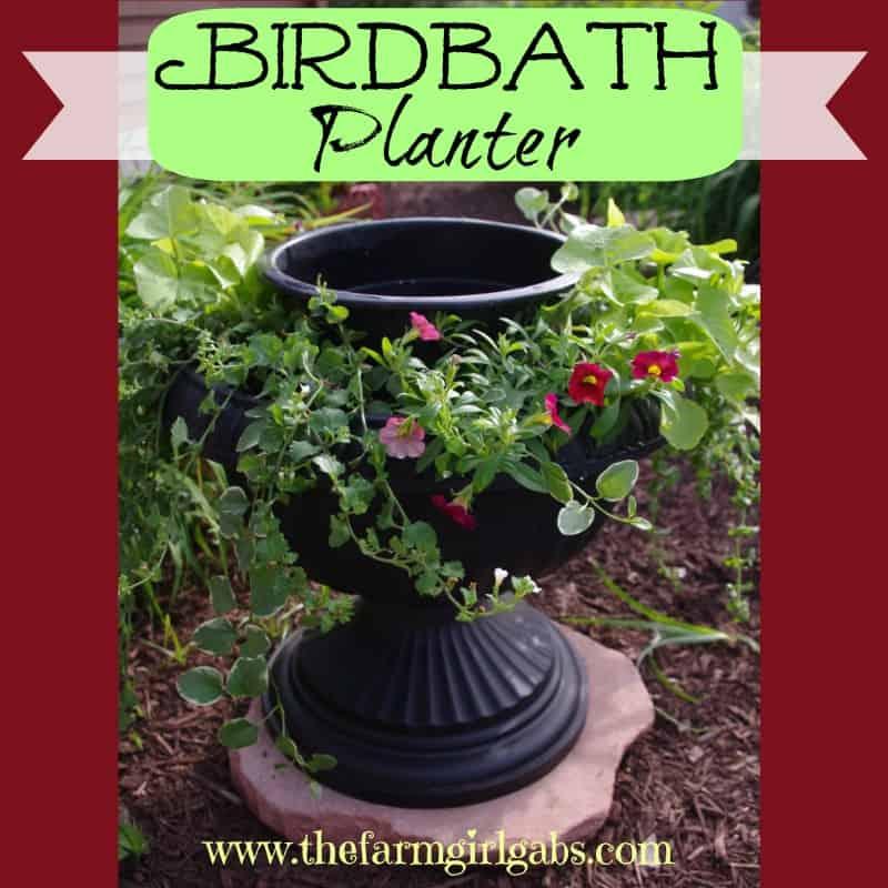birdbath planter square