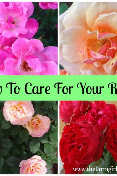 Take Time To Stop and Smell The Roses: Simple Rose Care Tips & Techniques