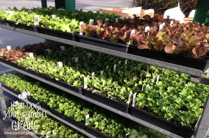 fall vegetable cart