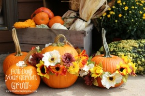 Festive Flower Pumpkins - Feature