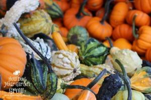Gourds & Munchkins