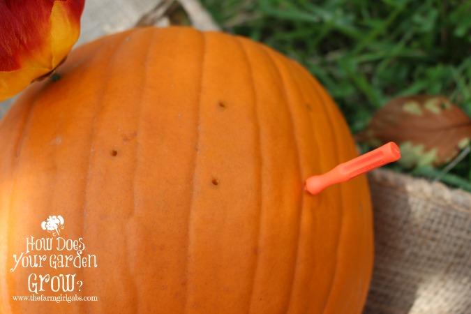 Pumpkin Prep