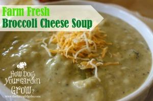 Farm Fresh Broccoli Cheese Soup