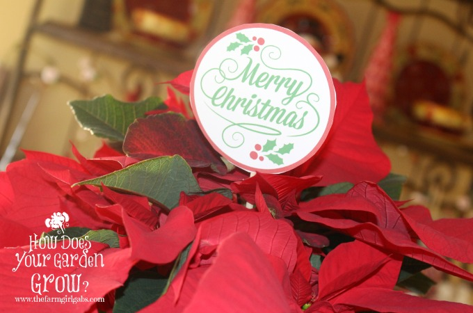 Poinsettia Hostess Gift with Printable Gift Tag