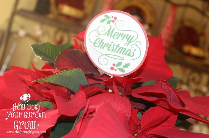 Poinsettia Hostess Gift with Printable Gift Tag