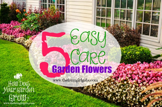 Five easy care garden flowers for Easy maintenance flowers and plants