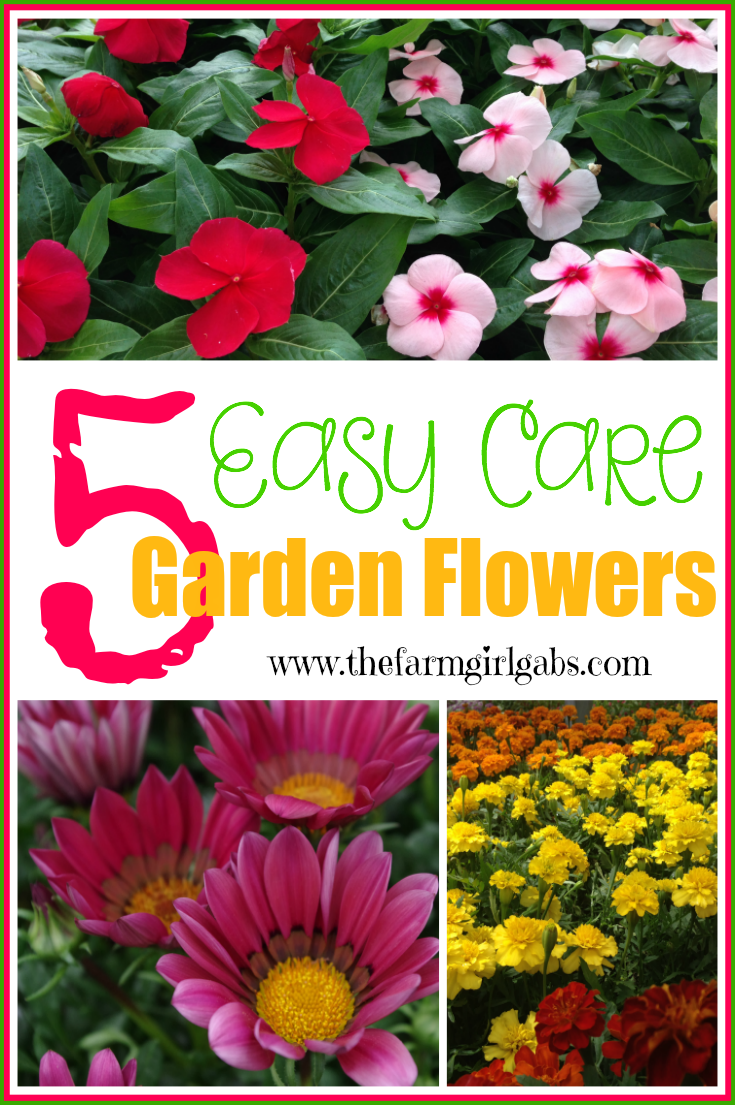 5 Easy Care flowers that your can plant in your garden. www.thefarmgirlgabs.com