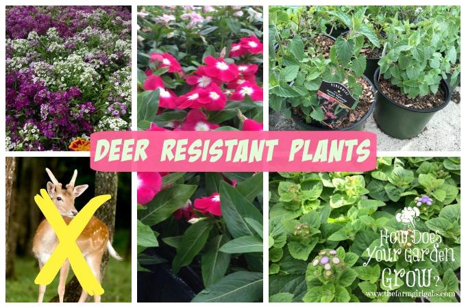 Deer Resistant Plants