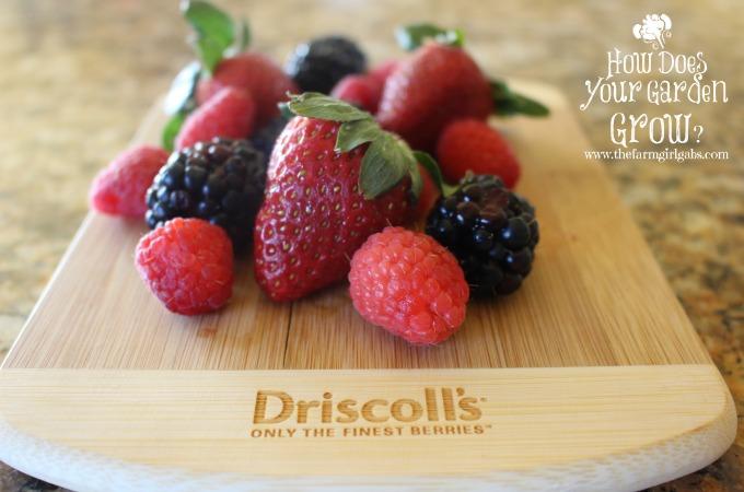 Driscoll Berries