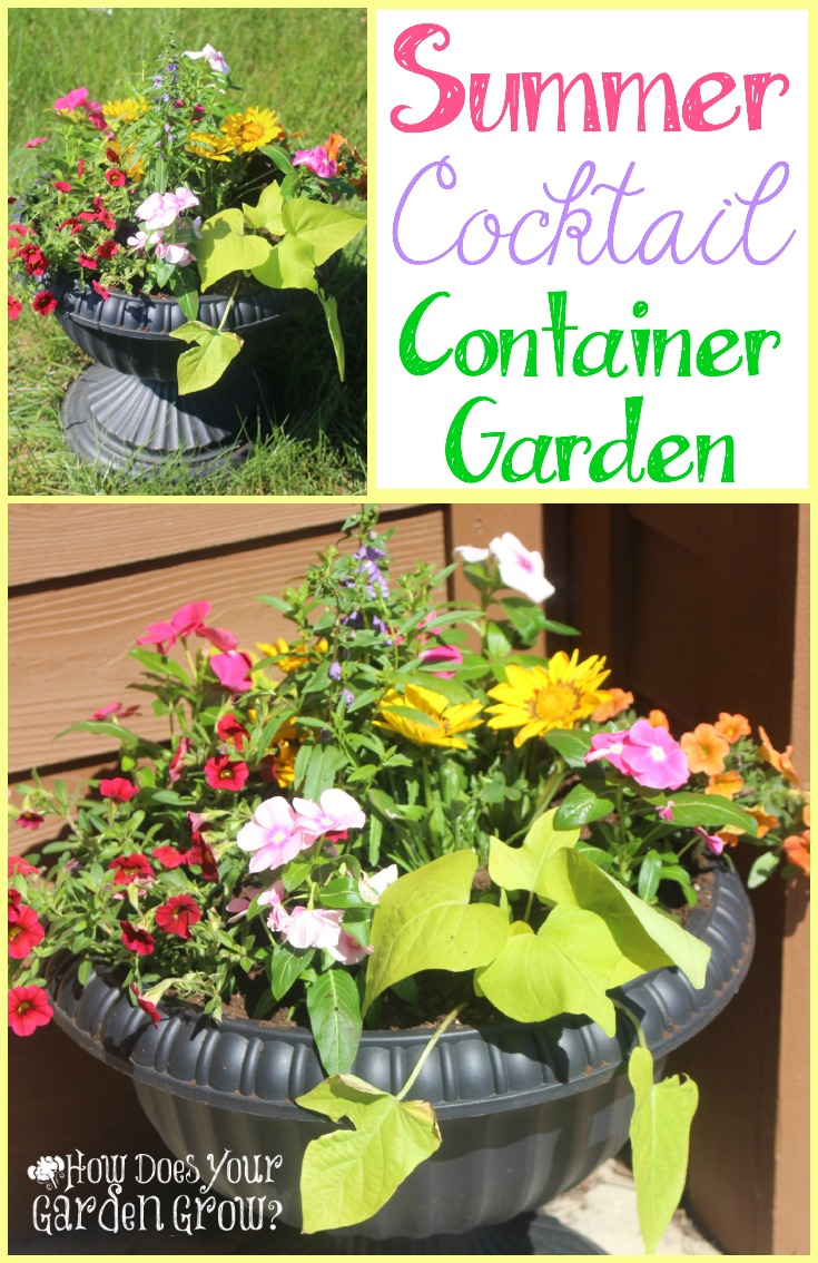 Create this colorful Summer Cocktail Container Garden. Bright Annuals blend together to form this cheery planted pot. This was inspired but the container gardens at the Epcot International Flower and Garden Festival. #DisneySMMC #DisneySide #WaltDisneyWorld