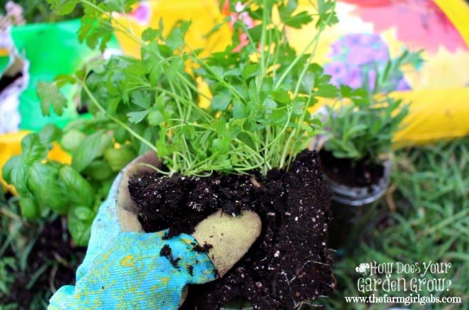 Mason Jar Herb Garden - Step 1