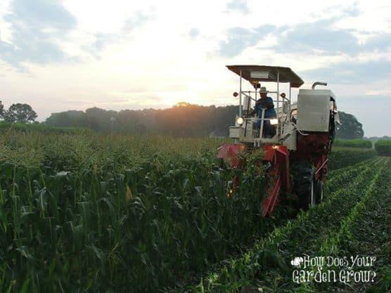 corn-picker