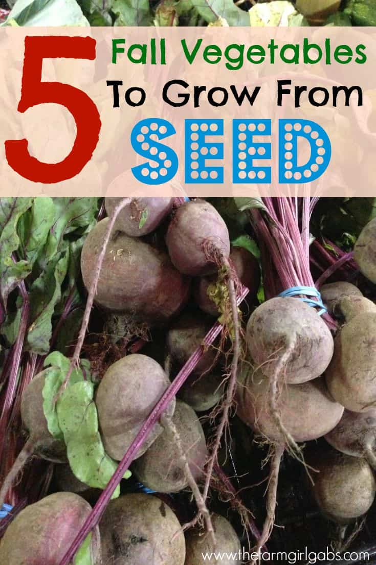 Five easy fall vegetables for grow from seed. #fall #gardening #fallgardening #vegetablegardening #gardeningtips