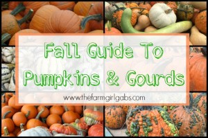 Fall Guide To Pumpkins And Gourds