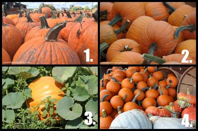 Pumpkin Collage 1
