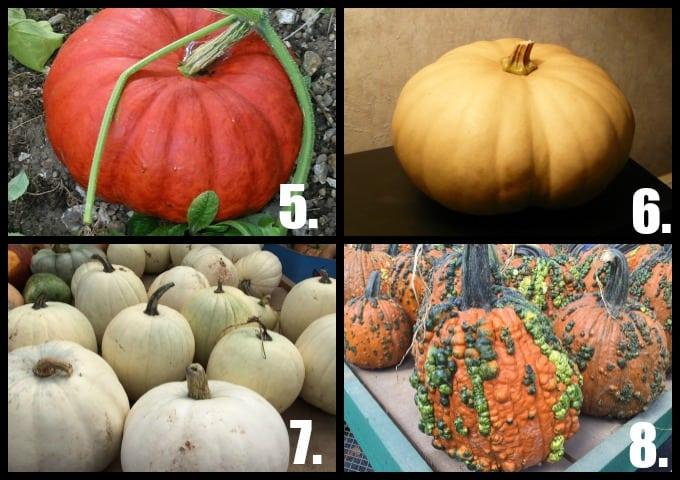Pumpkin Collage 2