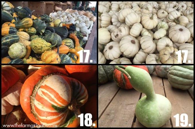 Pumpkin Collage 5