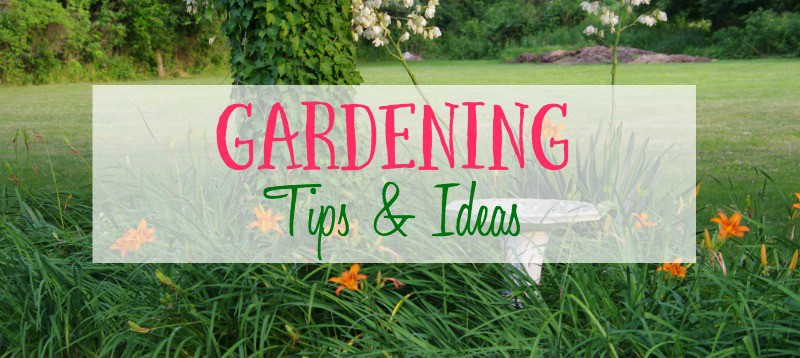 Gardening Tips & Ideas