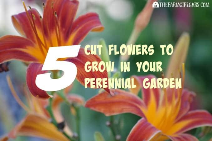 Five Perennials To Grow In Your Cut Flower Garden