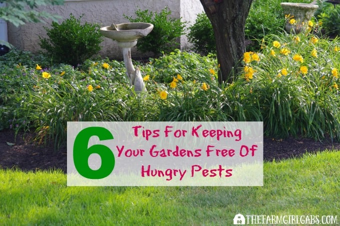 Six Tips For Keeping Your Gardens Free Of Hungry Pests