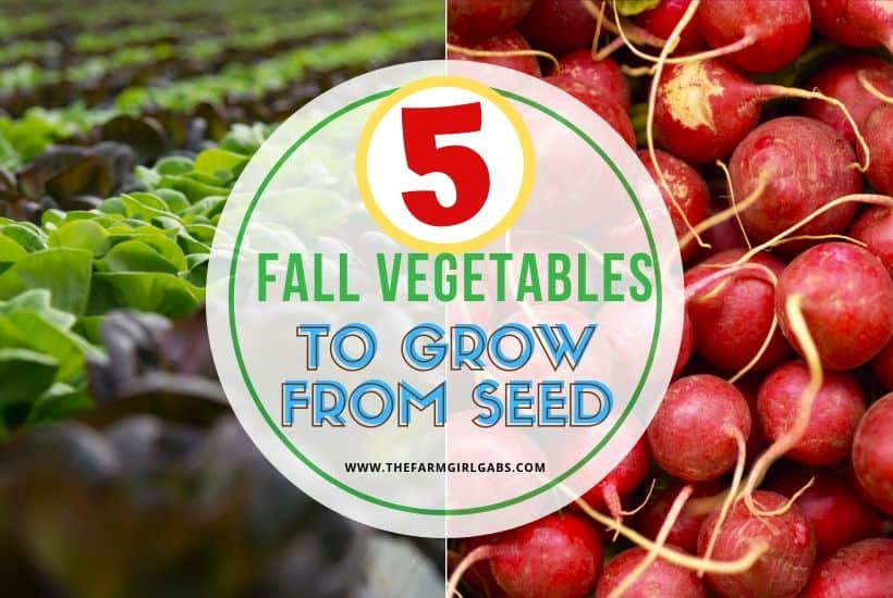 Five Easy Fall Vegetables To Grow From Seed