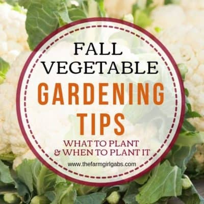 Just because the season is changing doesn't mean it's not too late to start a garden. Here is Fall Vegetable Gardening Tips to plant your fall garden. These vegetable garden planting tips will help your garden look great this fall. #gardeningtips #fallgarden #plants #vegetablegardening