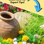 It's never too early to start planning your spring flower garden. These helpful tips for a better Spring Flower Garden with get your garden growingin no time. Growing a flower garden adds color and beauty to your landscape. Follow these flower gardening tips for the best garden growing success this spring. How To Grow A Flower Garden.
