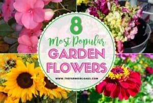 Popular Flowers for your Flower Garden