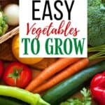Ready to dig in and start planting your garden? I have some helpful gardening tips. Here is a list of Easy Vegetables To Grow In Your Garden.