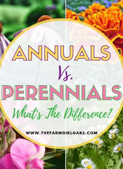 What's the Difference Between Annual and Perennial Flowers? Now that gardening season is here, let's dig in and find out! #gardeningtips #gardeningideas #perennials #annuals #flowers #flowergarden