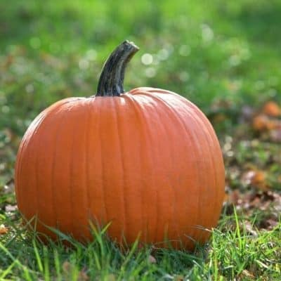 Tips For Visiting a Pumpkin Patch With Kids