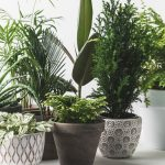 While some houseplants take a lot of time and upkeep, there are a variety of easy-care houseplants that are fairly maintenance-free. Do you have any of these low maintenance houseplants in your home?